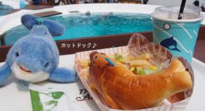 イルカを見ながらお昼ごはん