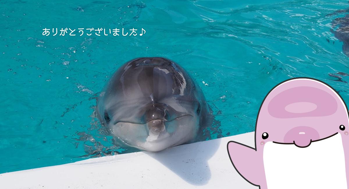 ありがとうございました♪  イルカ正面