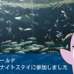 【実体験】鴨川シーワールドにて、初めて水族館でお泊まり「レディースナイトステイ」に参加しました