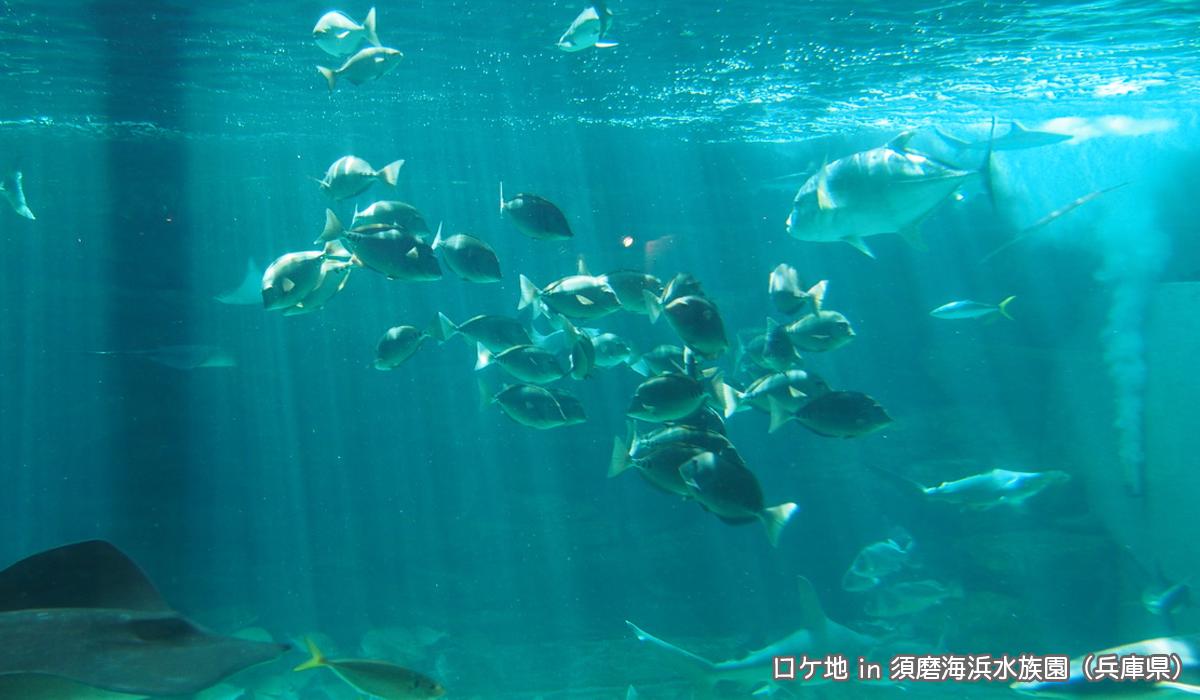 お魚がいっぱい