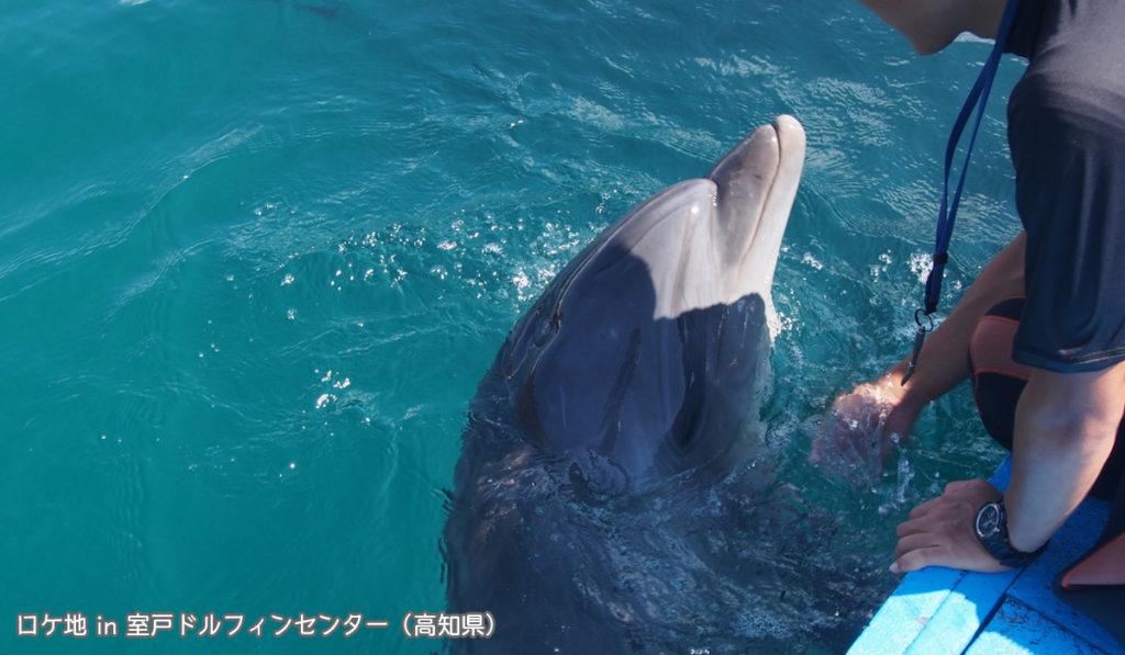 イルカと触れ合える「室戸ドルフィンセンター」
