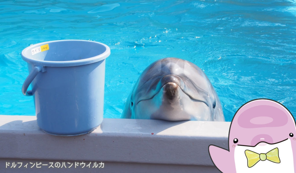 餌待機中のイルカ
