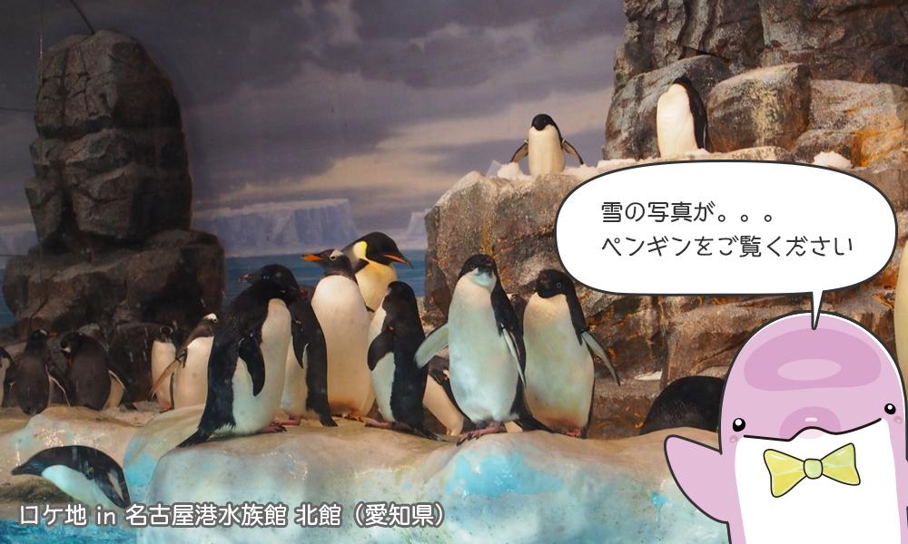 雪の写真がないので、ペンギンの写真をどうぞ