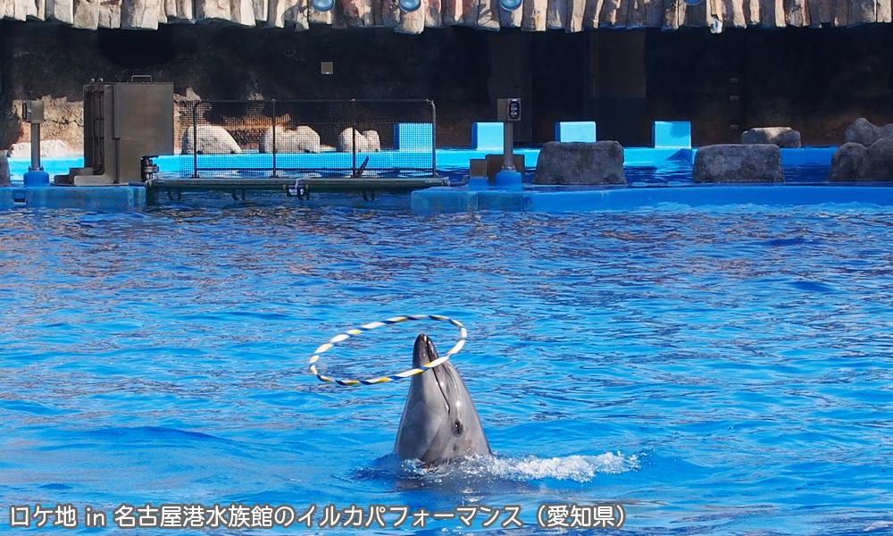無意味な情報に振り回されない ロケ地 in 名古屋港水族館のイルカパフォーマンス