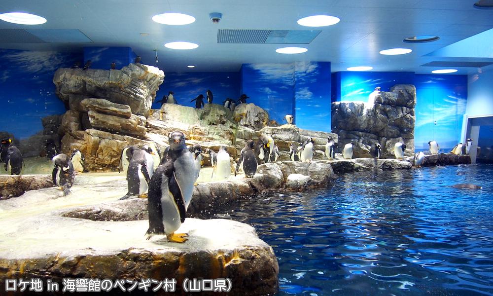 海響館のペンギン村