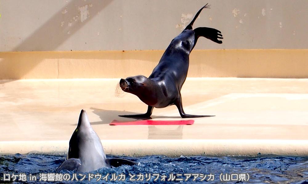海響館のハンドウイルカ とカリフォルニアアシカ