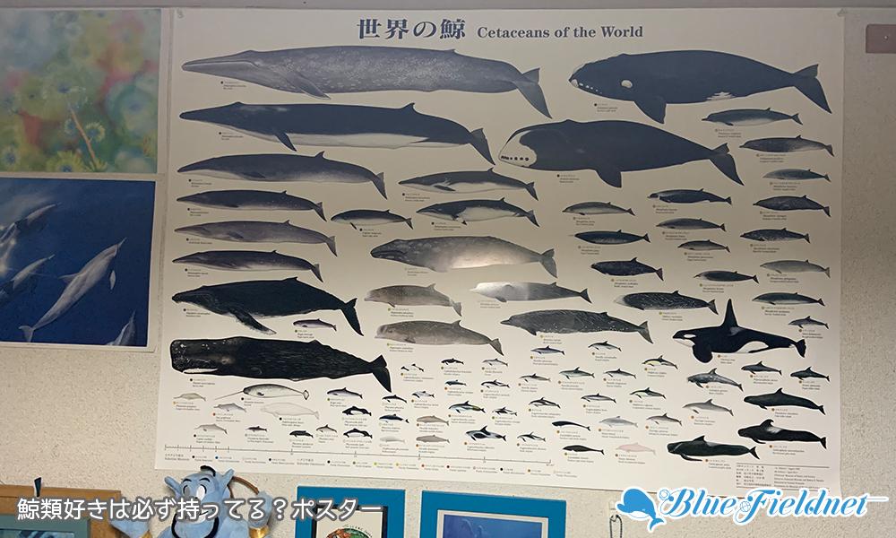 世界の鯨ポスター