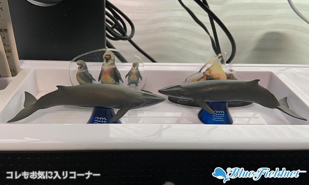 お気に入りのニタリクジラのフィギュア